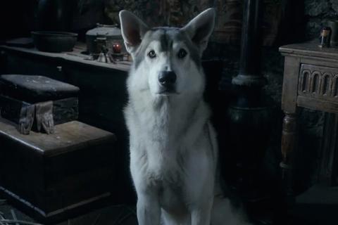"""""""Trò chơi vương quyền"""" khiến chó husky bị bỏ rơi hàng loạt"""