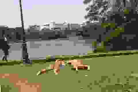 Hai nữ du khách tắm nắng Hồ Gươm không bị xử phạt hành chính