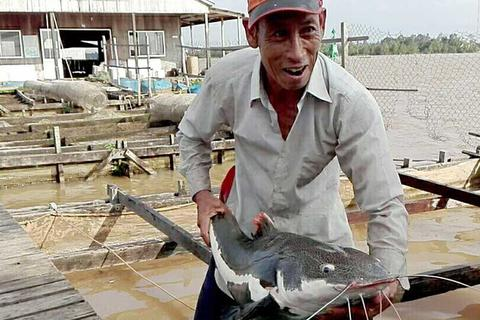 Lão nông miền Tây nuôi 'thủy quái vùng Amazon'