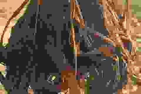 Bắc Giang: Diễn tiến mới nhất vụ cây lúa biến dạng cạnh khu công nghiệp!
