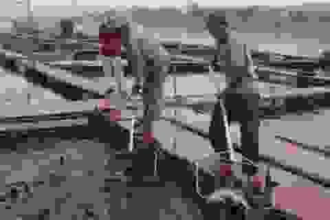 Người lập kỳ tích nuôi cá tầm ở vùng hạ lưu sông Đà