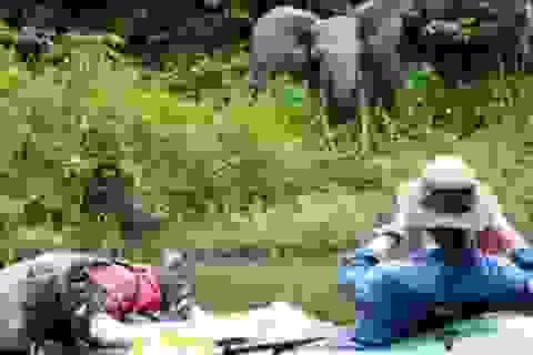 Những tour khám phá động vật hoang dã hấp dẫn nhất thế giới