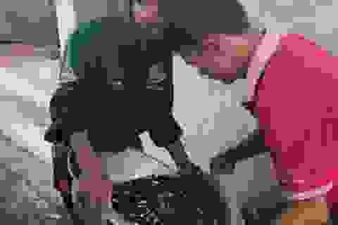 """""""Gia Cát Lượng"""" ở Bắc Giang 24 năm làm nghề ương cá giống"""