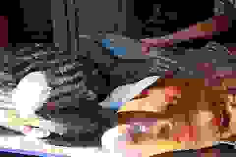 """Cặp cá nhà giàu """"bay"""" từ Biển Hồ về Thủ đô giá hơn nửa chỉ vàng mỗi kg"""