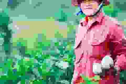 Bỏ lúa, trồng ổi lê Đài Loan, thu 30 triệu/tháng