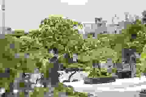 """Mê mẩn những kiệt tác bonsai """"độc nhất vô nhị"""" ở Hà Nội"""
