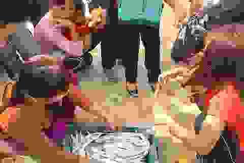 Ngư dân trúng đậm mùa cá cháo, cá hố