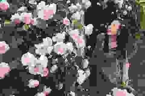 """Ngôi nhà hoa hồng """"đẹp như cổ tích"""" của nữ Việt kiều Hungary"""