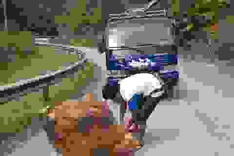 """Nam thanh niên """"kéo"""" hòn đá gần 1 tấn khỏi mặt đường"""