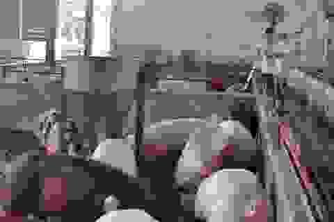 Bán thịt heo với giá 35.000 đồng/kg để cứu người chăn nuôi