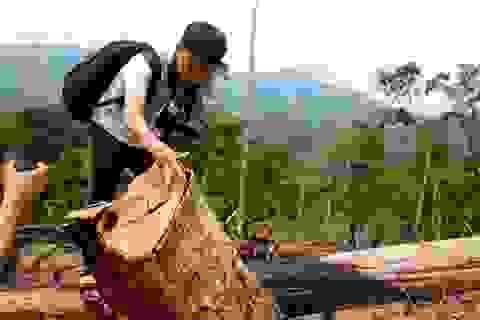 """Vụ """"cạo trọc"""" rừng tự nhiên, trồng keo: Chính quyền và kiểm lâm buông lỏng quản lý"""