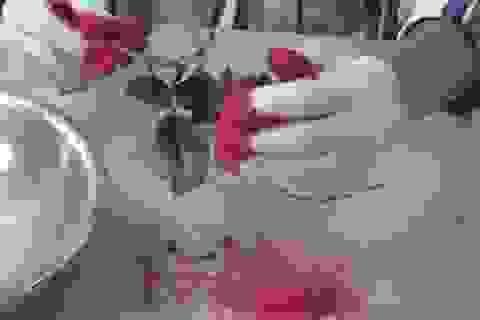 Điều gì xảy ra khi nhúng bông hoa hồng vào nitơ lỏng?