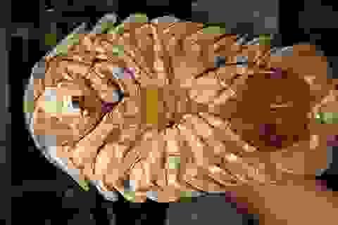 Bọ biển khổng lồ 4 triệu đồng/con: Món nhậu lạ của dân Hà thành