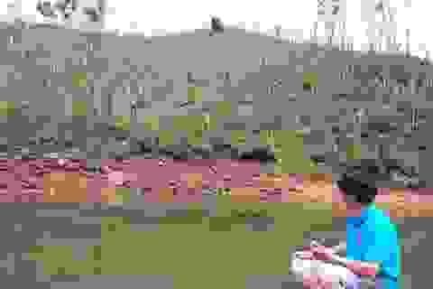 Rừng bị tàn phá sau bão: Đề xuất trao quyền tự quyết cho chủ rừng