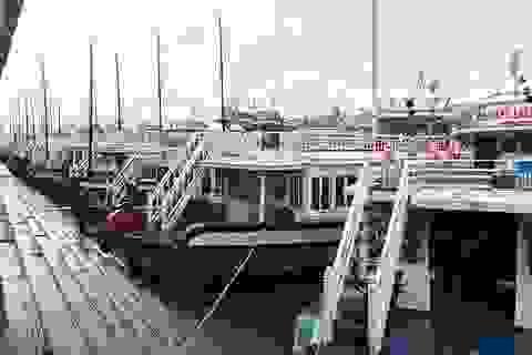 """Du khách Anh chết trong tư thế treo cổ trên tàu du lịch """"chui"""""""