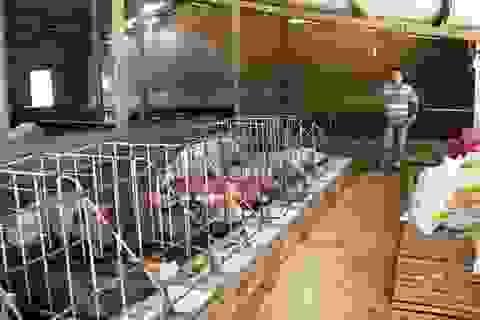 """Bình Định: Xây dựng khẩn cấp những ki ốt bán thịt heo """"cứu"""" người chăn nuôi"""