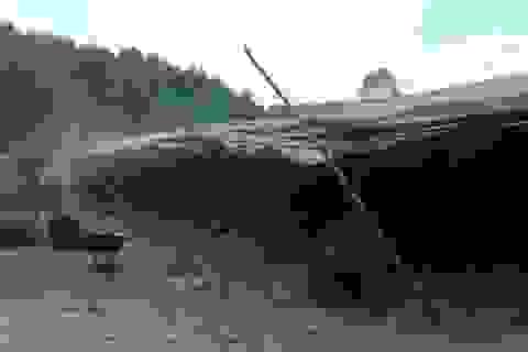 """Xử phạt cơ sở sản xuất cau """"chui"""" gây ô nhiễm có lao động Trung Quốc"""
