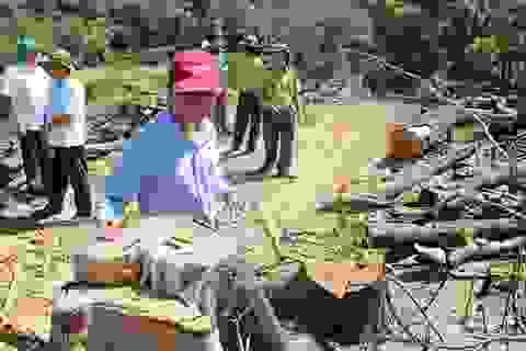 Gần 61ha rừng bị xóa sổ: Có hay không DN kêu gọi người dân nhận tội thay?