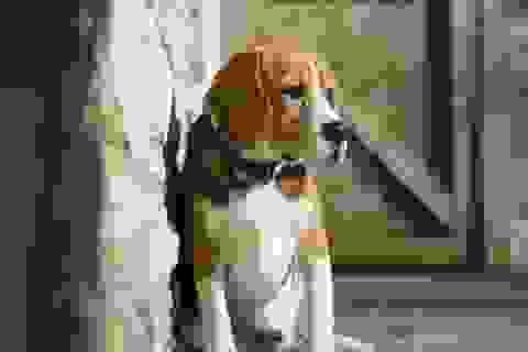 Phim làm về thú cưng bị nghi… ngược đãi động vật