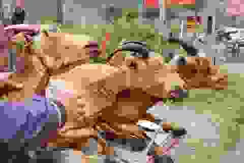 Ninh Bình: Kiếm tiền triệu trong ngày nhờ bán thịt dê