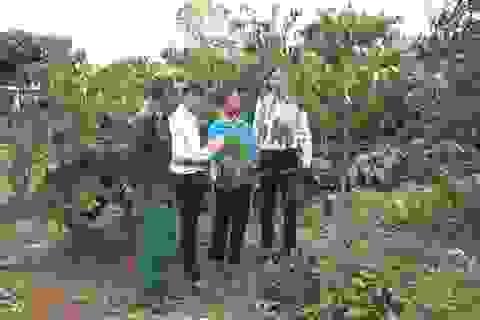 Người dân trồng cà phê phấn khởi đón vốn vay từ dự án VnSAT