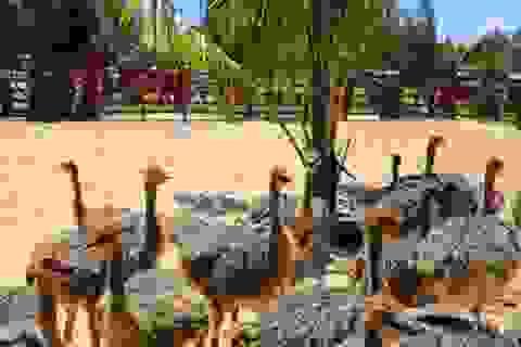 Vườn thú bán hoang dã đầu tiên ở phố biển Quy Nhơn hút khách ngày mở cửa
