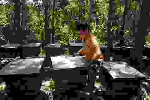 Một kí mật ong không bằng nửa bát bún, người nuôi bỏ đàn