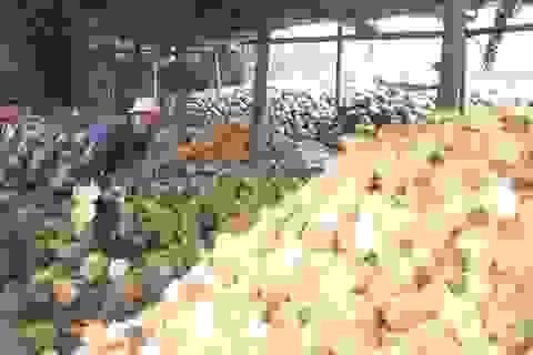 Vườn dừa xơ xác, doanh nghiệp phải nhập dừa về chế biến