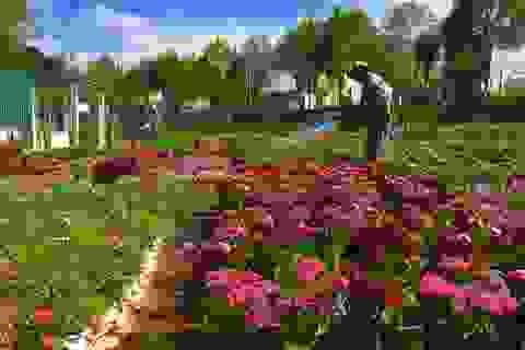 Hoa Tết mất mùa, nông dân hy vọng không mất cả.. giá