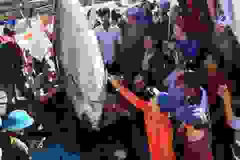 """Ngư dân trúng cá ngừ quý hiếm, bán giá """"khủng"""""""