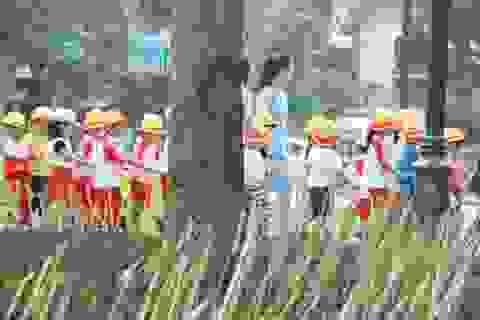 Hà Nội: Tháo dỡ ngay hàng chông tre nguy hiểm ở vườn hoa