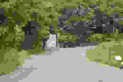 Đà Nẵng sẽ báo cáo Thủ tướng về dự án 137 lô biệt thự ở Sơn Trà