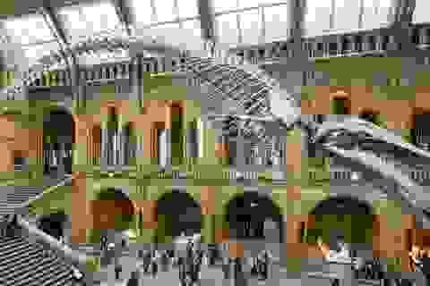 4 lý do để bảo tàng lịch sử tự nhiên khác so với thực tế