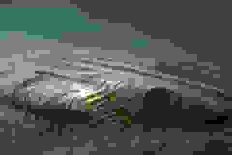 Bí ẩn về vật thể kỳ dị ở biển Baltic đã được giải quyết?