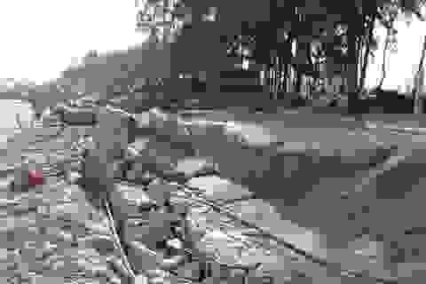 Thanh Hóa mất 1.000 tỉ do bão: Sầm Sơn kê cả thiệt hại trước bão?