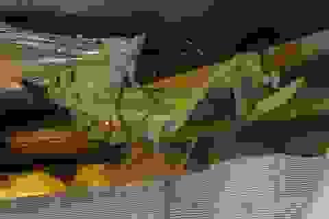 Đời sống tình dục phức tạp của một số loài sâu bọ