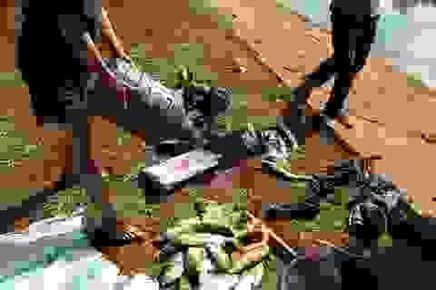 Cá chết bất thường trên hồ nghi do bị xả thải