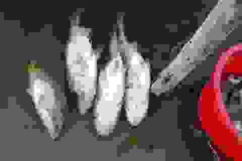 Cá chết trắng tại hồ tiếp nhận nước thải công ty dệt nhuộm