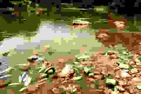 Cá chết bất thường trên sông Âm