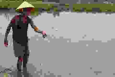 Đà Nẵng: Cá chết nổi trắng bàu