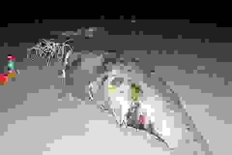 """Ngư dân chôn cất xác cá """"thần"""" dạt vào bờ biển"""