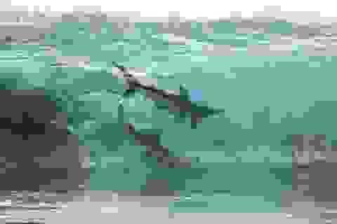 Rợn người trước cảnh đàn cá mập hàng trăm con bơi sát nhóm học sinh