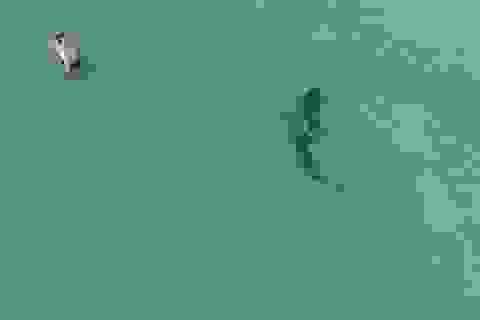 Rợn người khoảnh khắc cá mập áp sát mà người tắm biển không hay biết