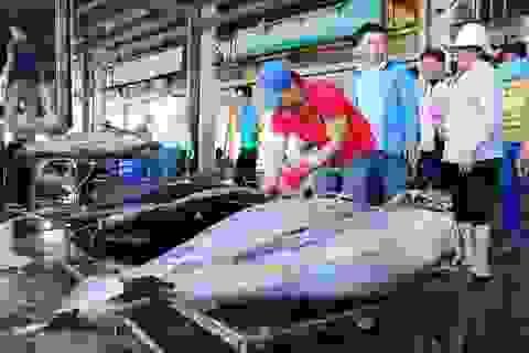 Nhiều tàu đánh bắt cá ngừ đại dương thua lỗ do bão Tembin