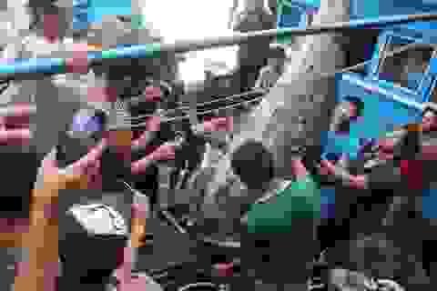 Xác lập kỷ lục cho cá ngừ vây xanh 307kg đánh bắt ở Hoàng Sa