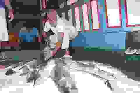Ngư dân trúng đậm cá, thu về gần 400 triệu đồng