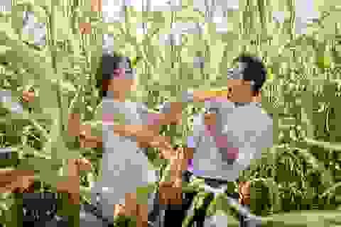 Bộ ảnh cưới giữa cánh đồng ngô của cặp đôi từng yêu xa cả ngàn cây số