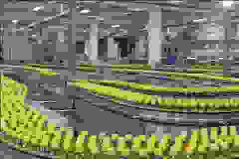 Kiểm soát chặt chất lượng sản phẩm để bảo vệ người tiêu dùng