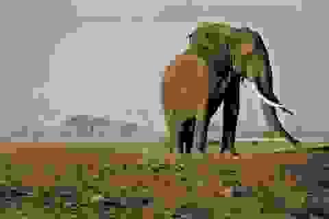 """""""Săn tìm chiến phẩm"""" có thể khiến tuyệt chủng các loài"""
