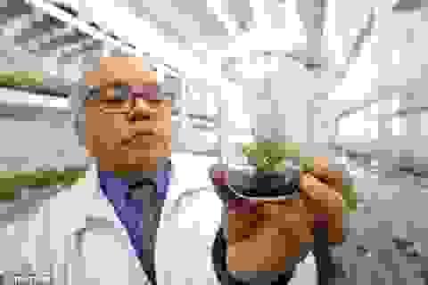 Chile nghiên cứu sản xuất kem chống nắng từ loài thực vật